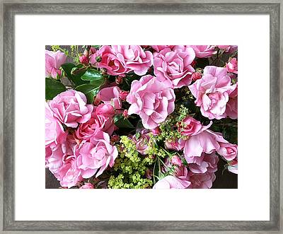 Roses From The Garden Framed Print