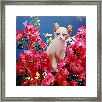 Roses Galore Framed Print