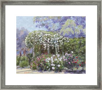 Roses In A Garden Framed Print by Dominique Amendola