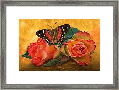 Roses In Golden Light 2 Framed Print