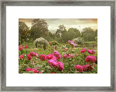 Roses In The Mist Framed Print by Jessica Jenney
