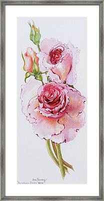 Roses  Framed Print by Joan Thewsey