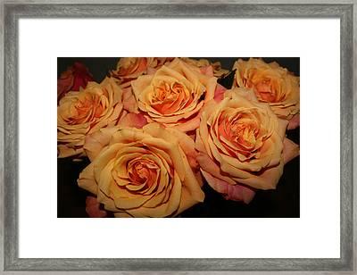 Roses Framed Print by Linda Hardin