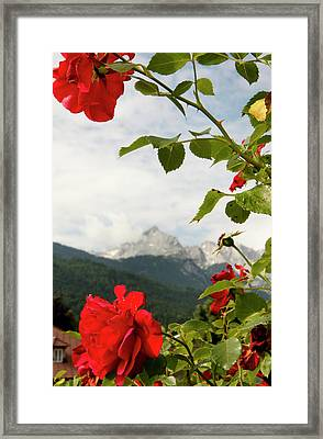Framed Print featuring the photograph Roses Of The Zugspitze by KG Thienemann