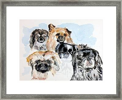 Rose's Pekingese Framed Print by Stan Tenney