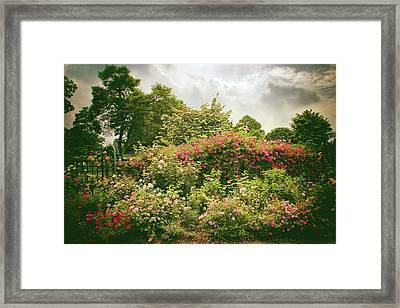 Roses Reign Framed Print by Jessica Jenney