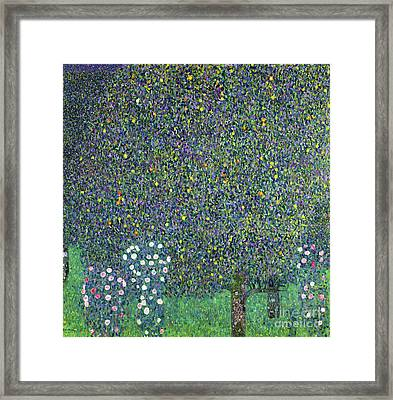 Roses Under The Trees Framed Print by Gustav Klimt