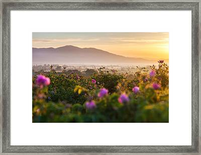 Roses Valley Framed Print