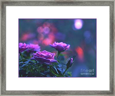 Framed Print featuring the photograph Roses With Evening Tint by Lance Sheridan-Peel