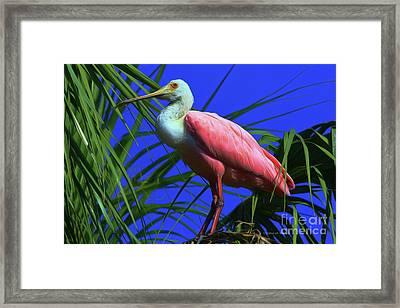 Framed Print featuring the painting Rosetta Spoonbill Alligator Farm by Deborah Benoit