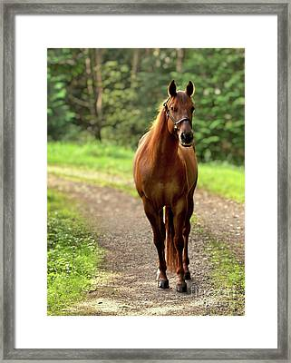 Rosey On The Road Framed Print