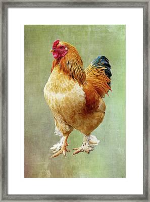 Otis T Rooster Framed Print