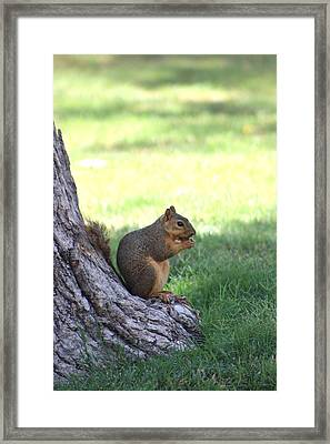 Roswell Squirrel Framed Print by Colleen Cornelius