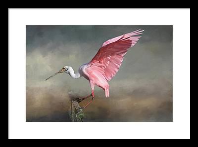 Ibis Framed Prints