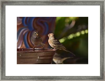 Rosy House Finch With White Crested Sparrows Framed Print by Linda Brody