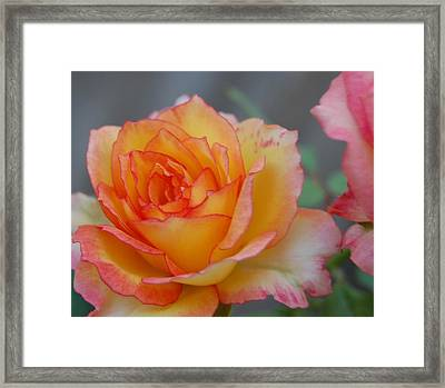 Rosy Outlook Framed Print by Jean Booth