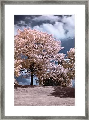 Forever Spring Framed Print by Helga Novelli