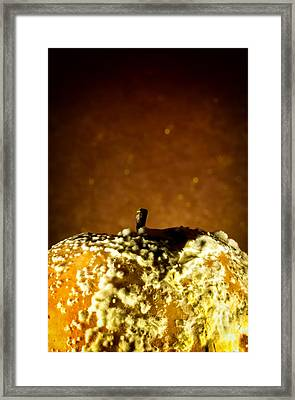 Rotten Apple And Fungus With Golden Background Framed Print by John Williams