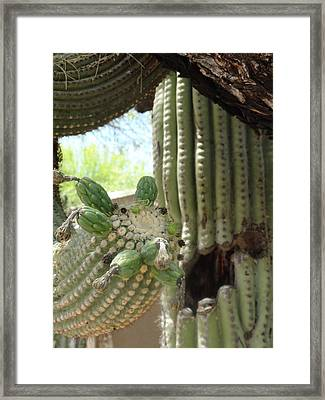 This Cactus Is Rotten To The Core Framed Print