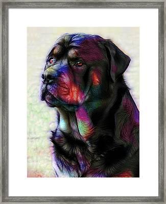 Rottweiler Framed Print by Alexey Bazhan