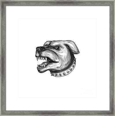 Rottweiler Dog Head Growling Tattoo Framed Print by Aloysius Patrimonio