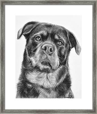 Rottweiler Drawing Titled Mama Framed Print by Kate Sumners
