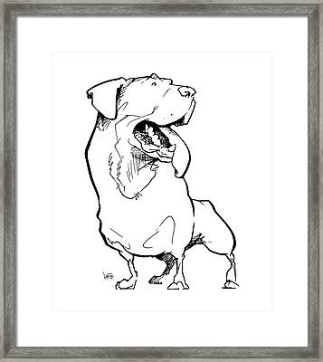 Rottweiler Gesture Sketch Framed Print