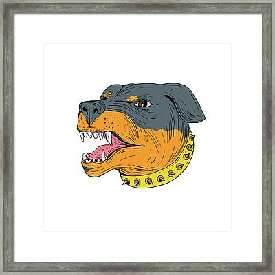 Rottweiler Guard Dog Head Aggressive Drawing Framed Print