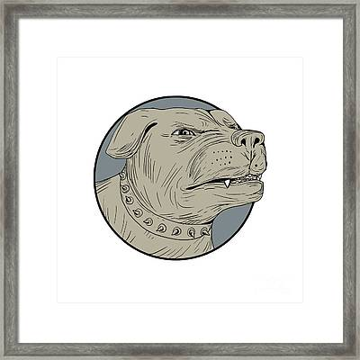 Rottweiler Guard Dog Head Angry Drawing Framed Print