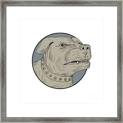 Rottweiler Guard Dog Head Angry Drawing Framed Print by Aloysius Patrimonio