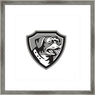 Rottweiler Guard Dog Shield Black And White Framed Print by Aloysius Patrimonio