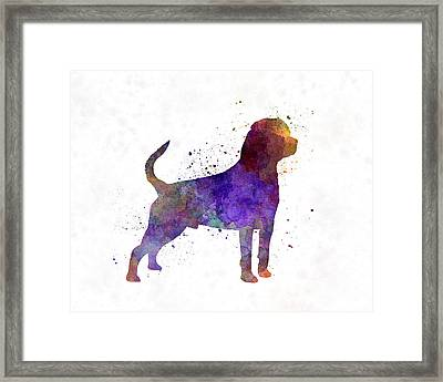 Rottweiler In Watercolor Framed Print by Pablo Romero