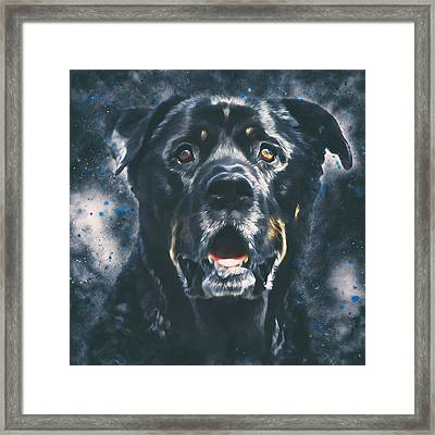 Rottweiler Portrait Framed Print by Wolf Shadow  Photography