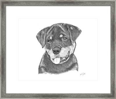 Rottweiler Puppy- Chloe Framed Print