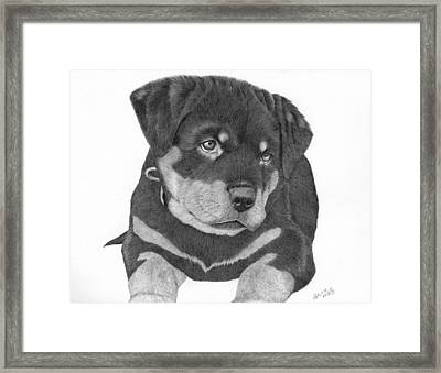 Rottweiler Puppy Framed Print by Patricia Hiltz
