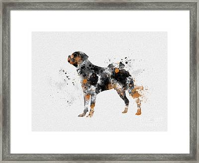 Rottweiler Framed Print by Rebecca Jenkins