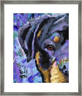 Rottweiler Framed Print by Ron and Metro