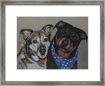 Rottweiler, Shepherd Mix Framed Print by Sun Sohovich
