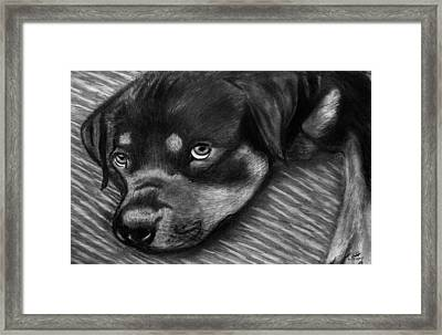 Rotty Framed Print by Peter Piatt