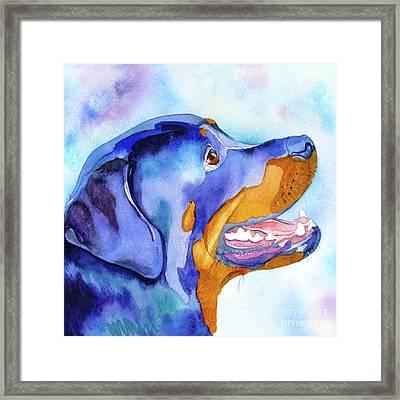 Rotty Rottweiler Blues Framed Print