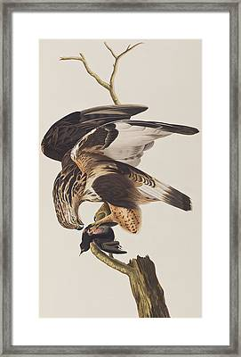 Rough Legged Falcon Framed Print by John James Audubon