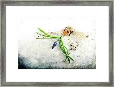 Rough Start Framed Print by Randi Grace Nilsberg