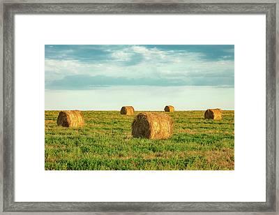 Round Hay Bales Framed Print