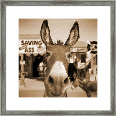Route 66 - Oatman Donkeys Framed Print by Mike McGlothlen