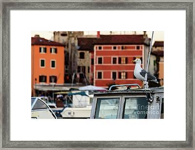Rovinj Harbor Seagull - Rovinj, Istria, Croatia Framed Print