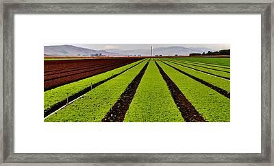 Row Crop Of Hollister Framed Print by Peggy Leyva Conley