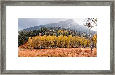 Row Of Aspens In The Fall River Valley - Fall Foliage In Estes Park Colorado Framed Print by Silvio Ligutti