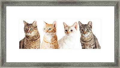 Row Of Cats Closeup Framed Print