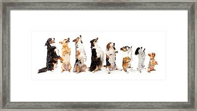 Row Of Dogs Sitting Up To Side Begging Framed Print