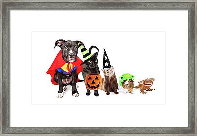 Row Of Household Pets In Halloween Costumes Framed Print